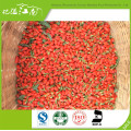 2017 new coming wholesale goji berry can be mixed with tea