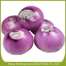 Red onion specification fresh