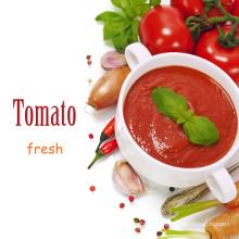 Tomatenpaste, Tomatenpaste, Tomatenpaste, Tomatenmark einspritzen