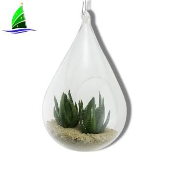 Succulent Glass Terrarium Tabletop