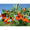 180grains / 50g Organic Goji Berry, USDA Certificed Organic Goji Berry