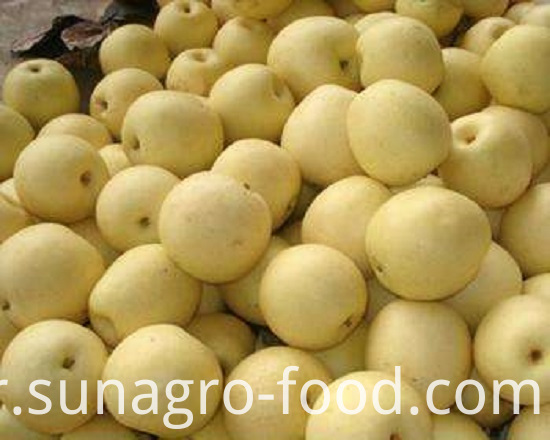 Fresh Quality Snow Pear