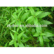High Quality Organic Nettle Seed Powder