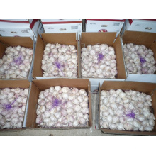 UAE Markt Heiße Verkäufe 2016 Ernte Frischer weißer Knoblauch