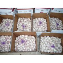 UAE Market Hot Sales 2016 Cultivo Ajo Blanco Fresco