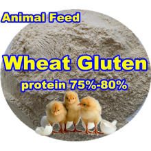 Wheat Gluten for Poultry Feed From Professional Producter