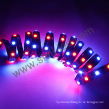 WS2812B /SK6812 RGB LED Tape Colour Full SPI Digital LED Strip Lights