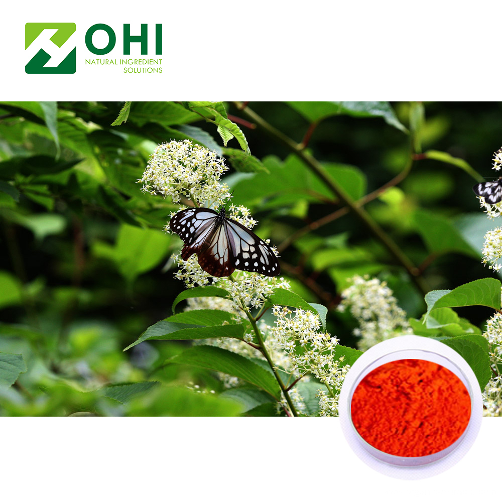 Tripterygium wilfordii Extract Celastrol 98% HPLC
