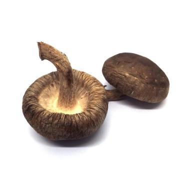Hot Sale Dried Flower Shiitake Mushroom  2021
