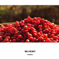 hot sell fresh goji berry full with vitamin