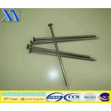 Clous de Chine pour la construction (XA-CN008)