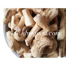 L'usine fournit un pied de champignons Shiitake déshydraté en gros