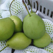 Green Color Fresh Shandong Pear