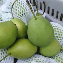 Зеленый цвет свежих груш Шаньдун
