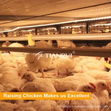Бройлерные клетки цыпленка батареи для продажи в Бангладеш