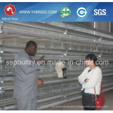Best Price Automatic Layer Chicken Poultry Shed with Eggs in Algeria