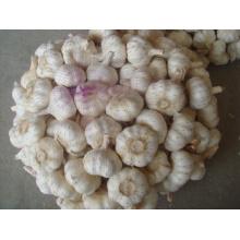 Новый урожай 5,0 см Нормальный белый чеснок