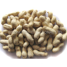 New Crop Peanuts in Shell