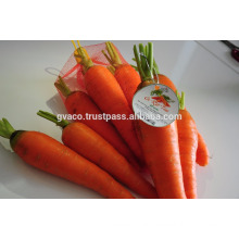 NEW FRESH CARROT EXPORTER BEST PRICE AND TOP QUALITY