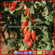 Ningxia goji ningxia goji berry organic goji berries wholesale
