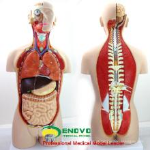 ANATOMIA de TÚNICA 12013 Plástico 27 Peças 85 cm Open Back Dual-Sex Modelos Anatômicos Torso Médico