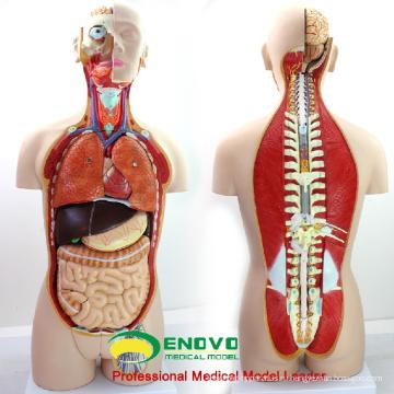 Анатомия TUNK 12019 обучающая модель торс Бесполый - 18 частей,85см