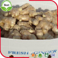 Chinese Fresh Ginger for Export