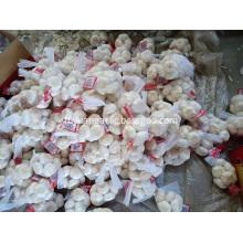 Saleing 2019 new garlic