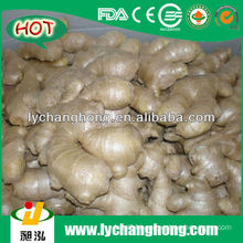 13.6kgs/pvc ctn Air Dried Ginger