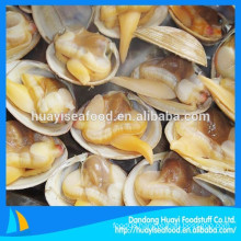 top sale frozen fresh surf clam in shell