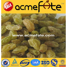 Best price top quality seeded \ raisin(golden,green,sultana,sun dried)