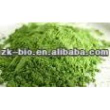 Polvo orgánico de Wheatgrass