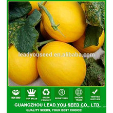 NSM261 Liulan hybrid quality golden melon seeds for sale,asian vegetables wholesalers