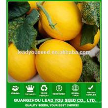 NSM261 qualidade Shuju tarja sementes de melão musk guangzhou