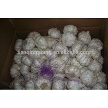 10kg carton garlic for Sale, 2014 Crop Garlic