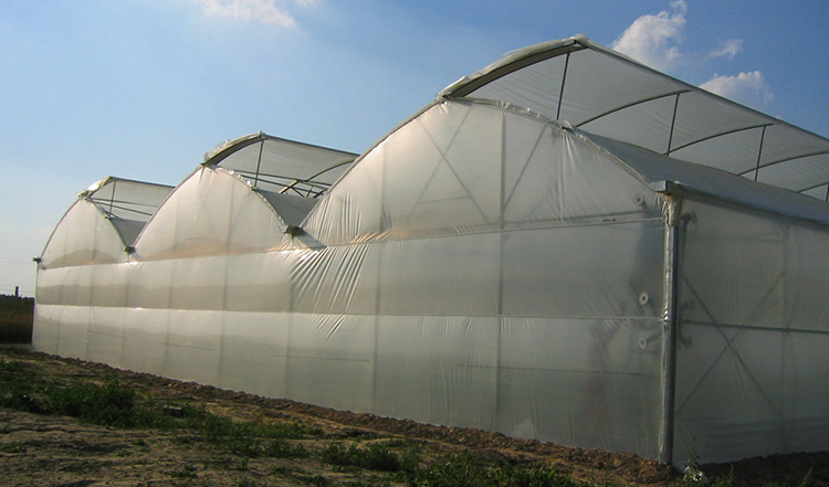 Pe Film Multi Span Greenhouse