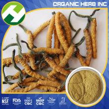 Cordyceps Sinensis εκχύλισμα 40% πολυσακχαρίτες σκόνη