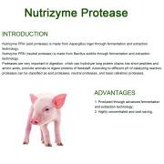 Protease untuk meningkatkan pencernaan protein hewan