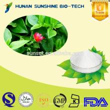 Proveedor profesional para Andrographis hierba PE 50% / 98% Andrographolide
