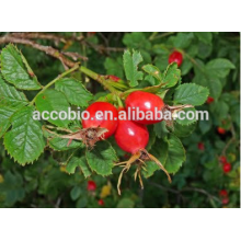 High quality Pharmaceuticals grade organic rosehips fruits extract