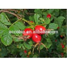 Extrato orgânico dos frutos dos rosehips da categoria de alta qualidade dos fármacos