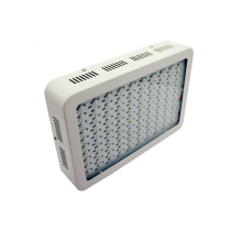Wholesale 1000W Double Chips COB LED Grow Light for Basement Veg&Fruit Plant