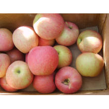 Qinguan Apple 2017 Fresh Crop
