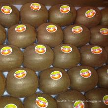 Exporter des fruits frais Kiwi délicieux (25, 27, 30, 33, 36, 39)