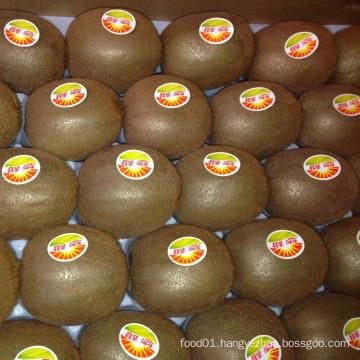 Export Fresh Delicious Kiwi Fruits (25, 27, 30, 33, 36, 39)