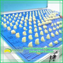 EN-G14 Fábrica Diretamente Envio Dentes Modelo de Preparação para Treinamento de Educação
