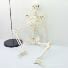 SKELETON06 (12366) Medizin Wissenschaft Klassische Medizinische Anatomie Standard 85 cm Menschen Skelett Modell Puppe