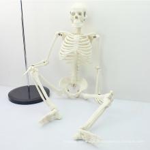 SKELETON06 (12366) Médical Classique Médical Anatomie Médicale Standard 85 cm Humains Squelette Mannequin