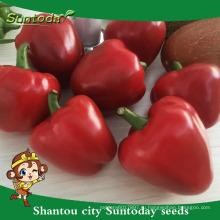 Suntoday vegetable органическое, где купить овощи дома перец чили сад китайские семена овощей каталог продажи(21004)