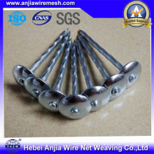 Galvanized Iron Nails Roofing Nails / Common Nails / Concrete Nails